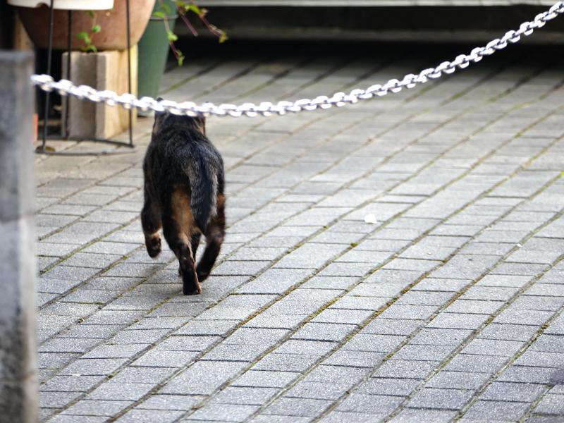走り去るキジトラ猫の後ろ姿1