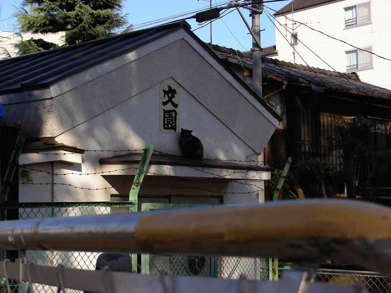 蔵とサビ柄猫1