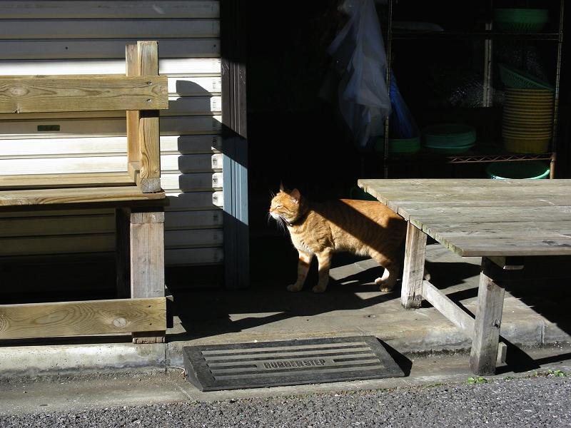 ベンチの下から出てきた茶トラ猫1