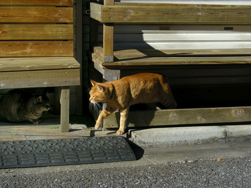 ベンチの下から出てきた茶トラ猫2