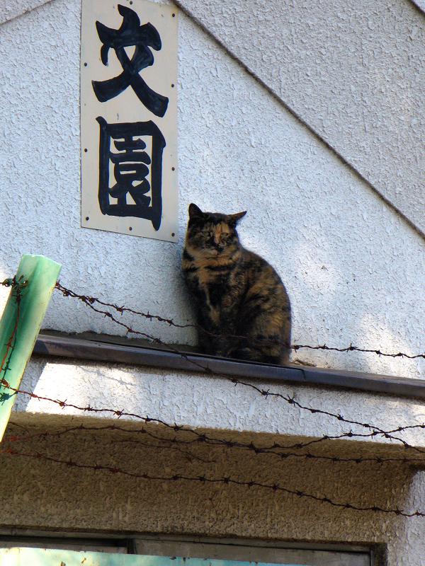 蔵とサビ柄猫2