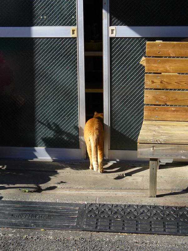 ベンチの下から出てきた茶トラ猫4