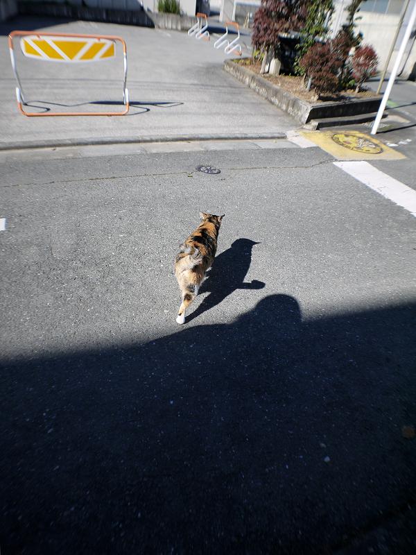 日向へ向かう三毛猫1