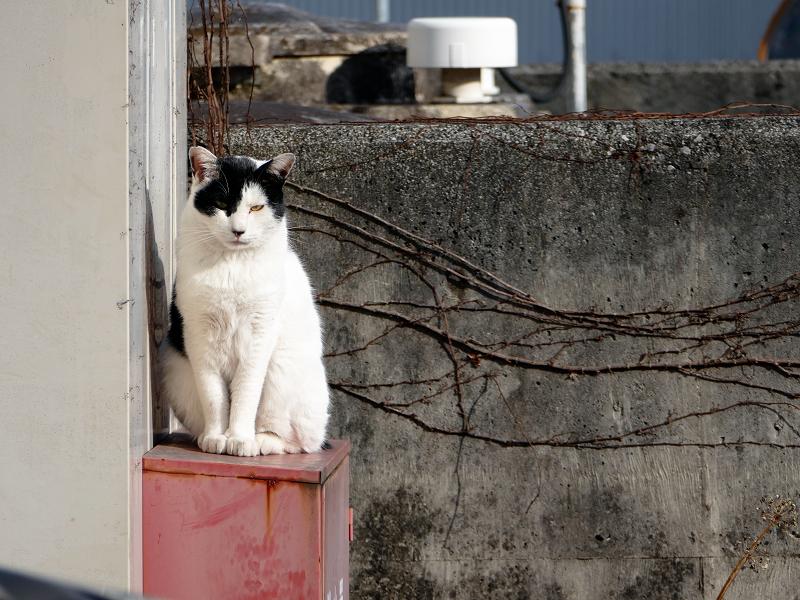 火の元見張り番白黒猫2