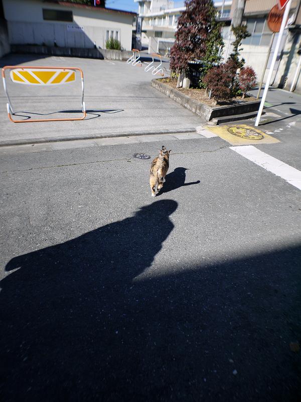 日向へ向かう三毛猫3
