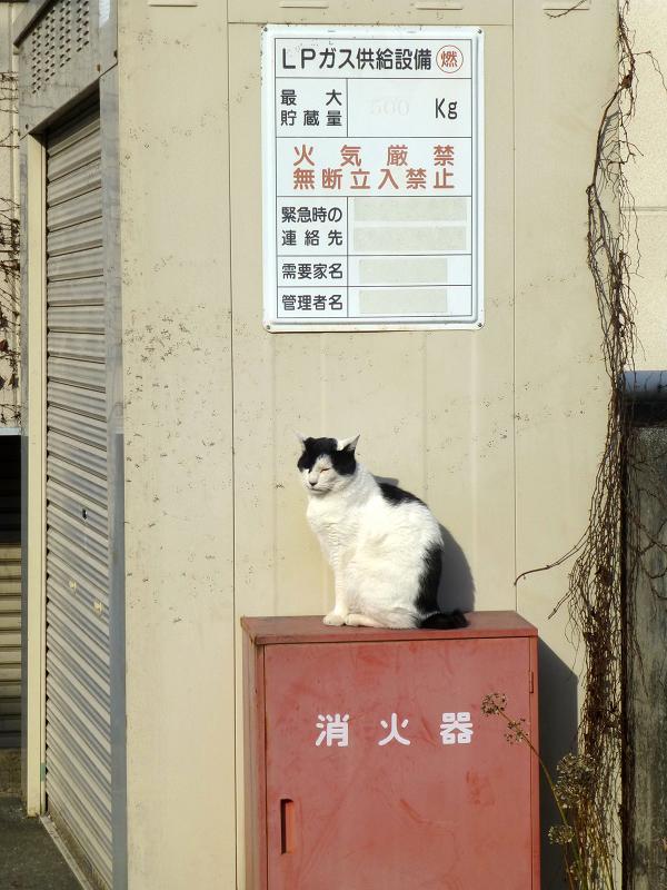 火の元見張り番白黒猫03