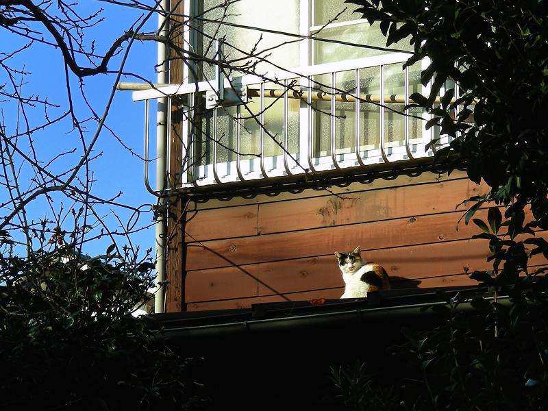 木の壁と三毛猫1