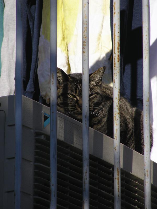 室外機とキジトラ猫