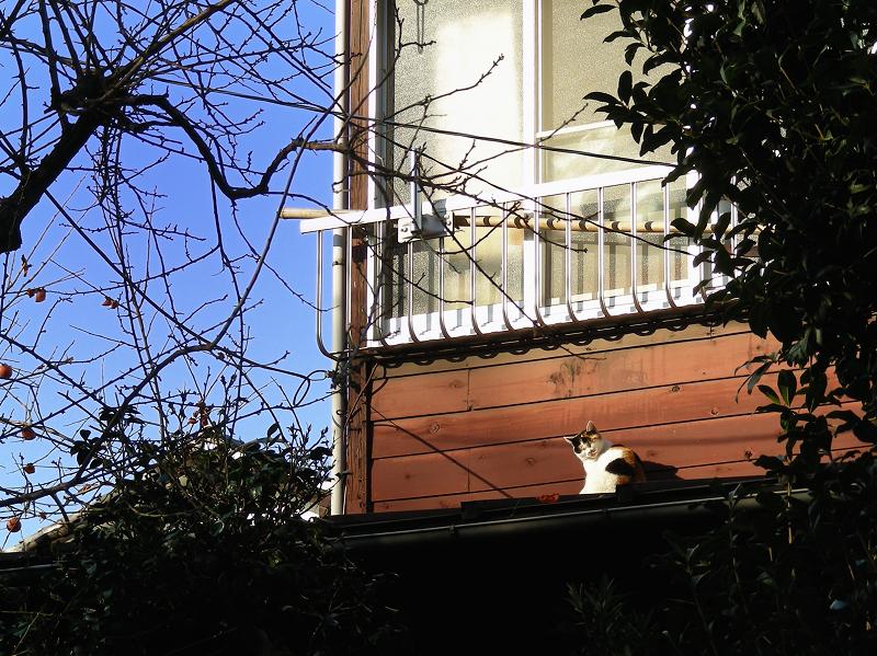 木の壁と三毛猫2