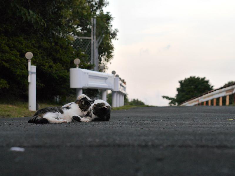 遠近感とキジ白猫2匹1