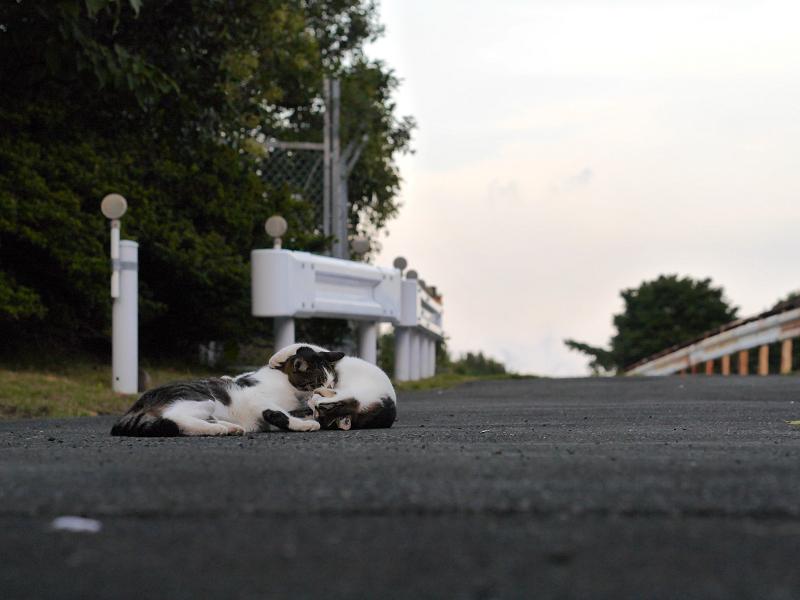 遠近感とキジ白猫2匹2