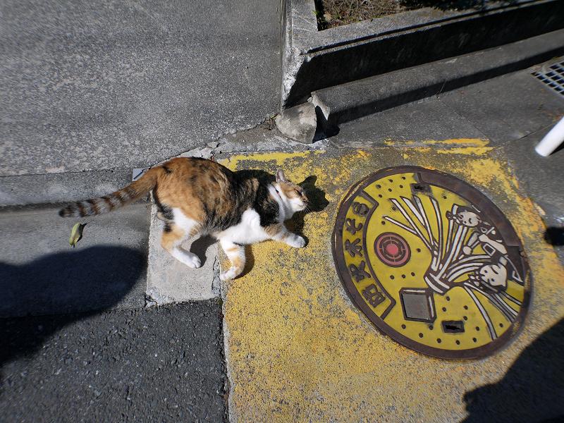マンホールと三毛猫1