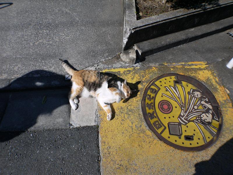 マンホールと三毛猫2