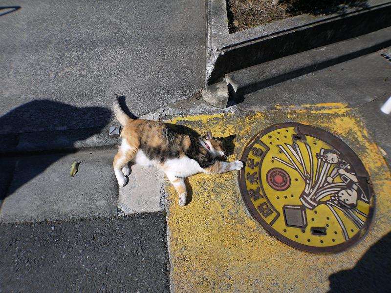 マンホールと三毛猫3