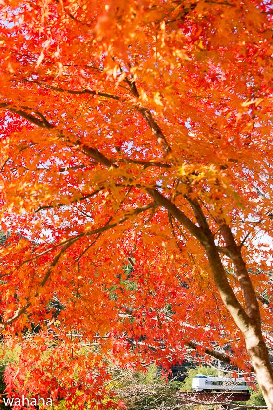 291125fukuchiyamasen-4.jpg