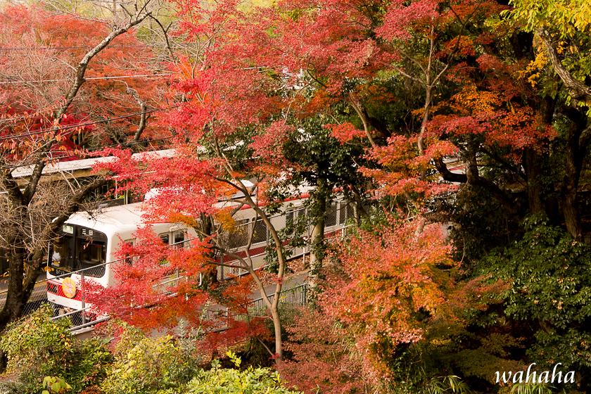 291125sintetsu_gosha.jpg