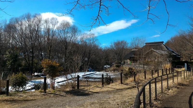 赤羽自然観察公園 雪が残っています
