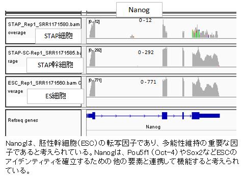 発現Nanog