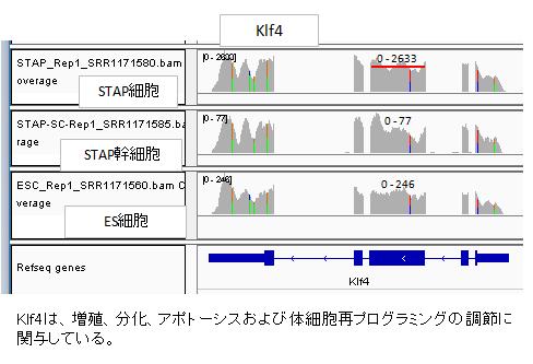 発現Klf4-3