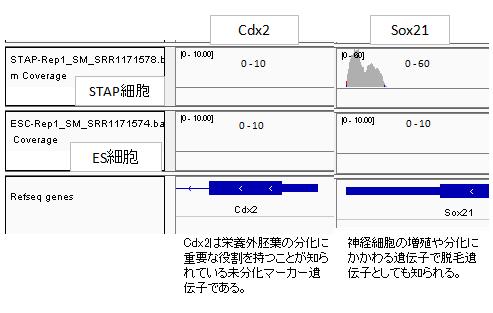 発現Cdx2-Sox21-2
