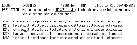 NOD_ShiLtJ-2.png
