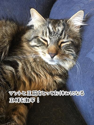 02012018_cat5.jpg