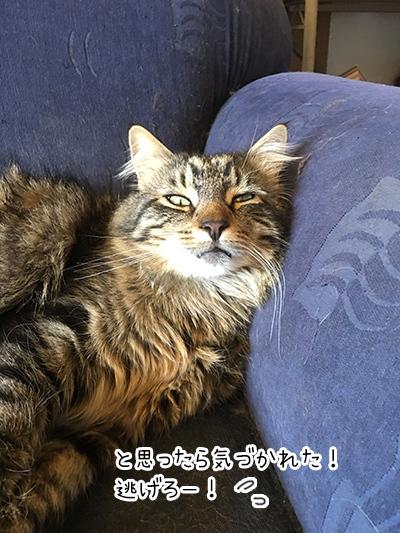 02012018_cat6.jpg