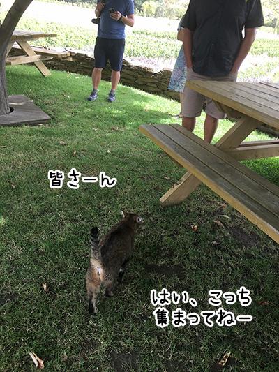 04012018_cat1.jpg