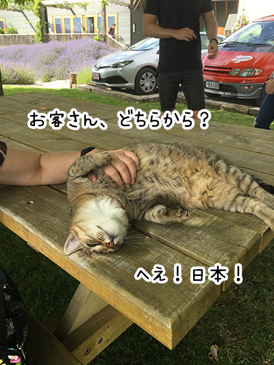 04012018_cat3.jpg