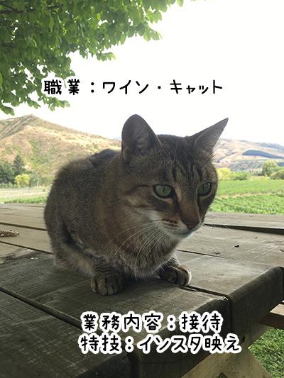04012018_cat4.jpg
