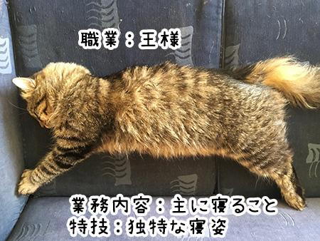 04012018_cat6.jpg