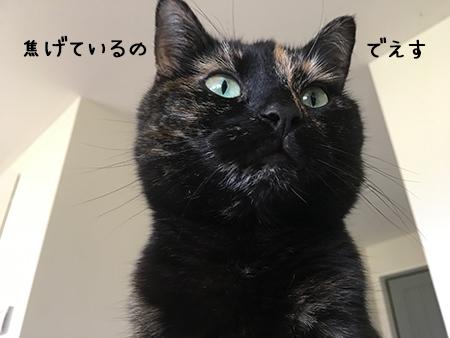 06012018_cat4.jpg