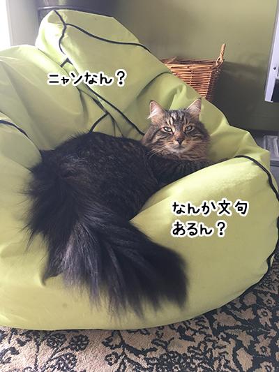 07012018_cat8.jpg