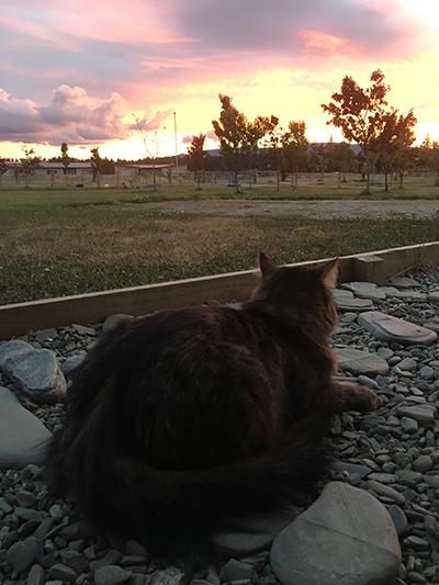 09012018_cat1.jpg