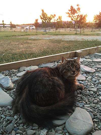 09012018_cat2.jpg