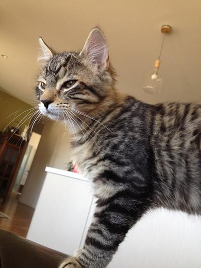 10012018_cat2.jpg