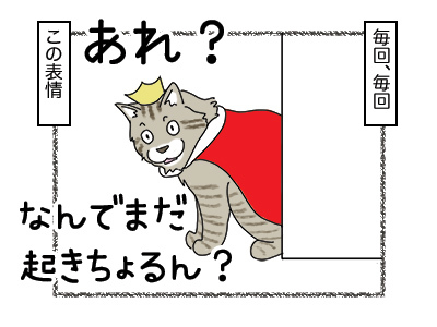 11012018_cat1mini.jpg