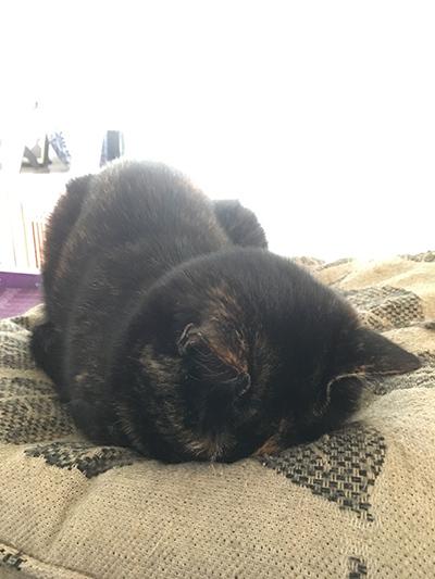 11012018_cat2.jpg