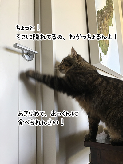 12012018_cat1.jpg