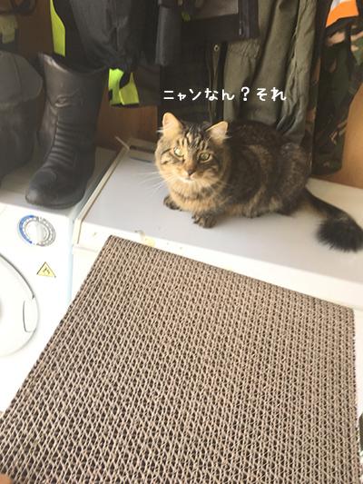 13022018_cat3.jpg