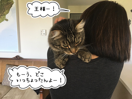 13022018_cat4.jpg