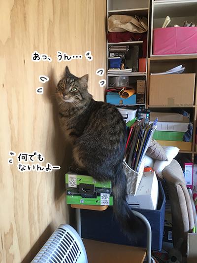 13022018_cat5.jpg
