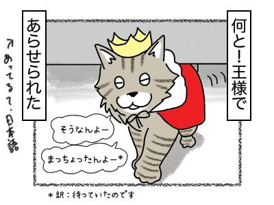 14022018_cat2mini.jpg