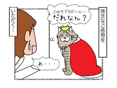 15012018_cat4mini.jpg
