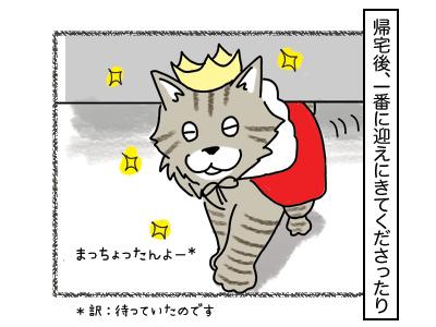 16022018_cat1mini.jpg