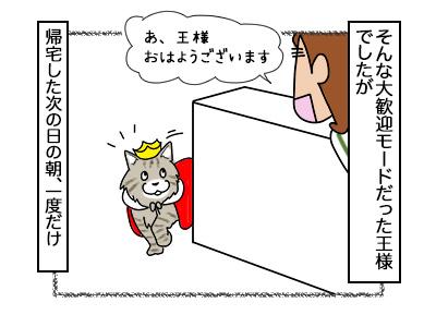 16022018_cat3mini.jpg