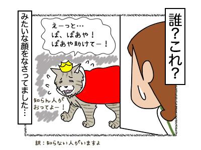 16022018_cat4mini.jpg