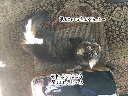 16022018_cat5.jpg