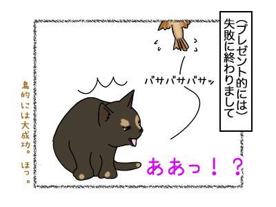 17022018_cat4mini.jpg