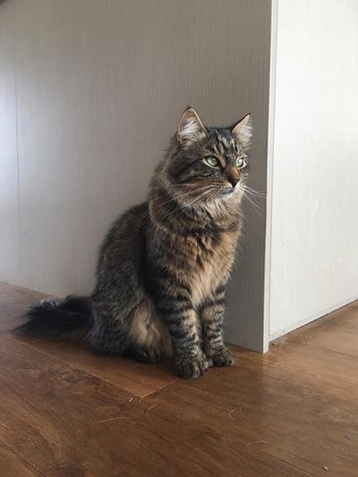 18012018_cat1.jpg